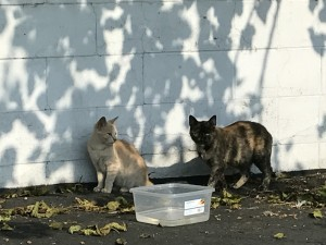 colony_cats